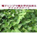春用芋苗 予約受付中 ◆さつまいも苗◆ 甘い クイックスイート サツマイモ苗  10本 切り芋苗