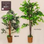 ベンジャミン&観音竹 2点セット(観葉植物/人工植物/造花/消臭グリーン/光触媒)