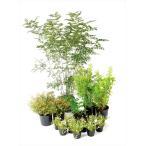 オンリーワン エントランス向け植栽セット ブリーゼ シマトネリコ やさしい景色 UN6-SET08