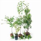 オンリーワン 食で選ぶ 植栽セット ハーベスト ジューンベリー 5感で選べるセット KJ6-SET04