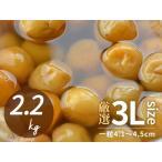 梅干し用梅 完熟梅 紀州南高梅 塩漬け梅 厳選 3Lサイズ 2.2kg