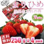 いちご まりひめ 和歌山オリジナル品種 2Lサイズ 250g(約12粒) x 4パック 送料無料 TVでも紹介された幻のイチゴ 秀品 イチゴ 苺 ご家庭・ご贈答用
