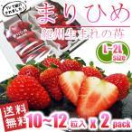 いちご まりひめ 和歌山オリジナル品種 L〜2Lサイズ 約300g(約10〜12粒) x 2パック 送料無料 TVでも紹介された幻のイチゴ 秀品 イチゴ 苺 ご家庭・ご贈答用