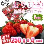 いちご まりひめ 和歌山オリジナル品種 Lサイズ 250g(約17粒) x 4パック 送料無料 TVでも紹介された幻のイチゴ 秀品 イチゴ 苺 ご家庭・ご贈答用