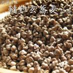 韃靼(だったん・ダッタン) そばの種(たね) 500g 北海道産 韃靼蕎麦 だったんそば ダッタンソバ ポリフェノールの一種のルチン