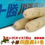 十勝川西長いも 10kg (AランクLサイズの長芋)HACCP認証 真っ白で細かい肉質のながいも とろろ芋にすると粘りがあります 北海道産