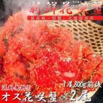Hanasaki Crab - 年末可 花咲ガニ 姿 ボイル 2尾で1.6kg前後 特大オス 冷凍 北海道加工 送料無料