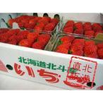 北海道産けんたろう(苺)1kg(250g×4パック)〔C〕北港直販☆いちご・イチゴ