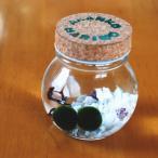 養殖まりも 2個入り コルク瓶 アクアリウム 水草 まりもの育て方の説明書付き