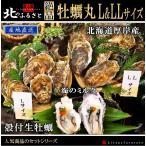 殻付き 生牡蠣 マルえもん L & LLサイズ 満足 セット カキナイフ 軍手付 北海道 厚岸産 牡蠣 かき カキ 生食用 人気 贈答 贈り物 産地直送 父の日 お中元
