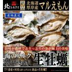 北海道厚岸産「マルえもん」生牡蠣 殻付きLサイズ×...