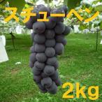 長野産 スチューベン 家庭用ぶどう 約2kg 4房〜9房 朝収穫 産地直送