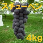 長野産 スチューベン 家庭用ぶどう 約4kg 8房〜13房 朝収穫 産地直送