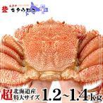 カニ かに 毛ガニ 北海道産 超特大 1.2-1.4kg前後 1尾入