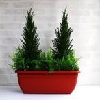 ゴールドクレスト 人工観葉植物