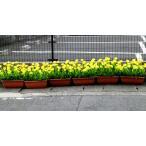 沢山並べて 春を満喫 菜の花 造花 プランター【菜の花プランター】【沢山飾って春満開】