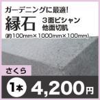 縁石/さくら 3面ビシャン