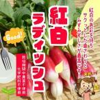 紅白ラディッシュ(紅白二十日大根) 栽培期間中農薬不使用 1袋6本以上 ※葉は多少切っている場...