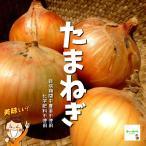 【暑い時期の常温便配送OK!】たまねぎ(玉ねぎ、タマネギ) 栽培期間中農薬不使用・化学肥料不使用 1袋約500g
