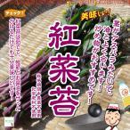 畑からの贈り物きづファームで買える「紅菜苔(こうさいたい) 栽培期間中農薬不使用・化学肥料不使用 1束♪」の画像です。価格は250円になります。