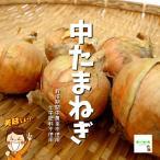 【暑い時期の常温便配送OK!】中たまねぎ(中玉ねぎ、中タマネギ) 栽培期間中農薬不使用・化学肥料不使用 1袋約500g