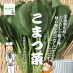 こまつ菜(小松菜) 栽培期間中農薬節減(低農薬)・化学肥料不使用 1束約250g