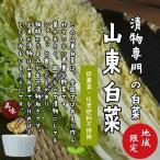 山東白菜 低農薬・化学肥料不使用  1/4カット ※葉を数枚とって洗浄してから出荷をするため、傷んでいる箇所がある可能性があります。