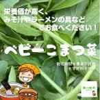 ベビー小松菜 栽培期間中農薬不使用 1袋♪
