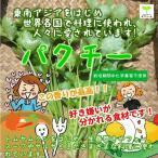 パクチー(コリアンダー、ザウムイ、シラントロ、シャンサイ、香菜) 栽培期間中化学農薬不使用 1袋♪