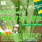 ロメインレタス 栽培期間中化学農薬不使用 1束約80g ※葉が1枚ずつになっている場合があります