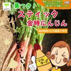 葉つき!スティック金時にんじん 栽培期間中化学農薬不使用 1束