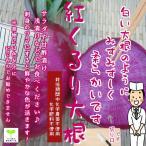 紅くるり大根 栽培期間中化学農薬不使用 1個約500g(小さい場合は2個になります)  ※葉は切ってあります