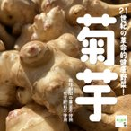 菊芋(きくいも) 栽培期間中農薬不使用 1袋約500g♪ ※サイズが小さいものも入っておりますので、予めご了承ください。