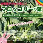 ブロッコリーの葉 栽培期間中農薬不使用 約200g