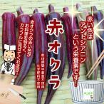 【暑い時期の常温便配送OK!】赤オクラ 栽培期間中農薬不使用・化学肥料不使用 1袋♪