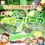 畑からの贈り物きづファームオリジナルベビーリーフ 栽培期間中農薬不使用 1袋♪