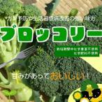 ブロッコリー ステビア農法使用・栽培期間中化学農薬不使用・化学肥料不使用 1個