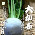 大かぶ 栽培期間中農薬不使用・化学肥料不使用 1個 ※葉がない場合もあります