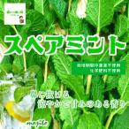 其它 - スペアミント 栽培期間中農薬不使用 1袋約20g♪