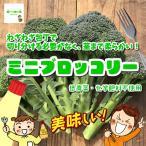 ミニブロッコリー 低農薬・化学肥料不使用 1袋約150g