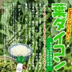 其它 - 葉ダイコン(葉大根、大根菜) 栽培期間中農薬不使用・化学肥料不使用 1束約200g ※内側の小さい葉の部分が切ってある場合があります