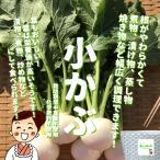小かぶ 栽培期間中農薬不使用・化学肥料不使用 1束約600g ※内側の小さい葉の部分が切ってある場合があります