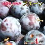 最安値 朝獲れ 味極み 生プルーン  減農薬 長野県産  4キロ