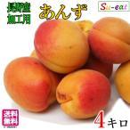 加工用 あんず アプリコット 長野県産 4キロ