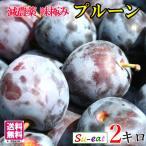 小玉アーリーリバー 生プルーン 減農薬 長野県産  2キロ レビューを書いたら200円クーポン