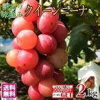 10月中旬発送 クイーンニーナ 訳あり 種なし ぶどう  長野県産  2キロ