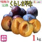 くらしま早生 生プルーン  減農薬 長野県産  1キロ レビューを書いたら200円クーポン
