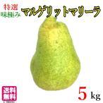 特選 大玉 洋梨 マルゲリット  マリーラ   長野県産 約5キロ