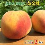 訳あり 黄金桃 長野県産 2キロ