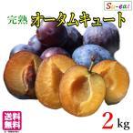 高級生プルーン オータムキュート 減農薬 長野県産 2キロ